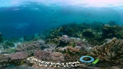 """Los nuevos """"puntos brillantes"""" dan esperanza a los arrecifes"""
