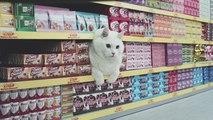 Netto met en scène les chats stars du net dans une publicité