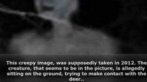 10 photos de créatures étranges et curieuses !