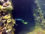 Wreck diving in coron Philippines  23 05 14