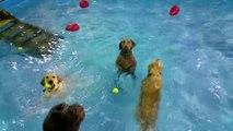 Un drôle de chien dans une piscine