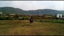 Stylish Horse At Shah Allah Ditta Islamabad!