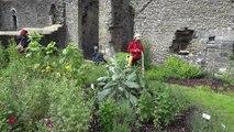 Plantes médicinales Villers la Ville