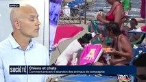 Chiens et chats: Comment prévenir l'abandon des animaux de compagnie