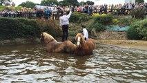 Pardon de  Restudo : La baignade des chevaux très prisée