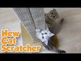 고양이들에게 새 스크래쳐를 보여줬을때 반응은?? Cats react to New Cat Scratcher [Suri&Noel]-EP52