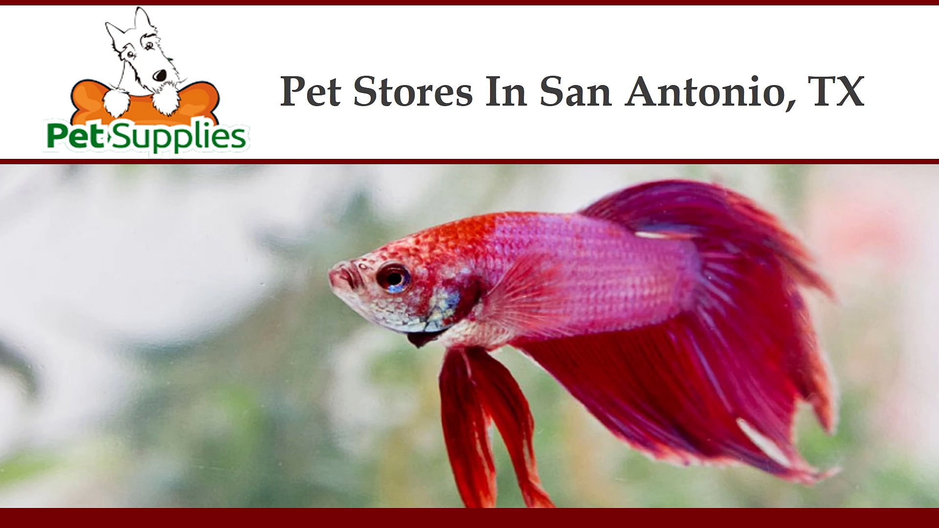 Pet Stores In San Antonio, Texas