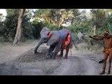 Africa, Kenya Masai Mara elephant, Zebras and wildebeest crossing the Mara River