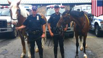 NYPD mounted unit gallops into action and stops mugger in Midtown