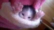 Il gattino più tenero del mondo! Avete mai visto niente di più bello?