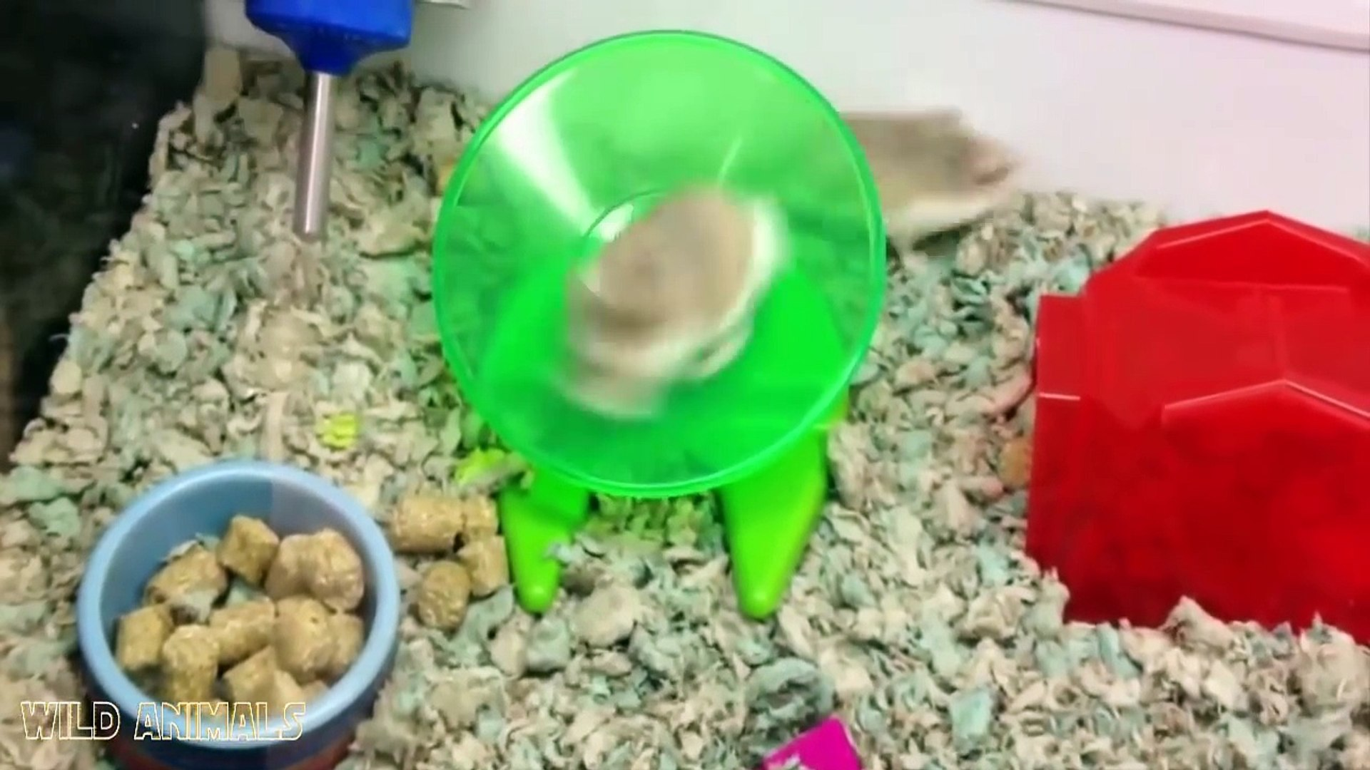 Cute Hamsters Doing Funny Things- Cute And Funny Animal Videos