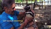 Ce pingouin nage 8000 km chaque année pour revoir l'homme qui lui a sauvé la vie - vidéo Dailymotion
