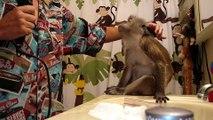 Elle prend son singe pour une poupée et passe son temps à le maquiller