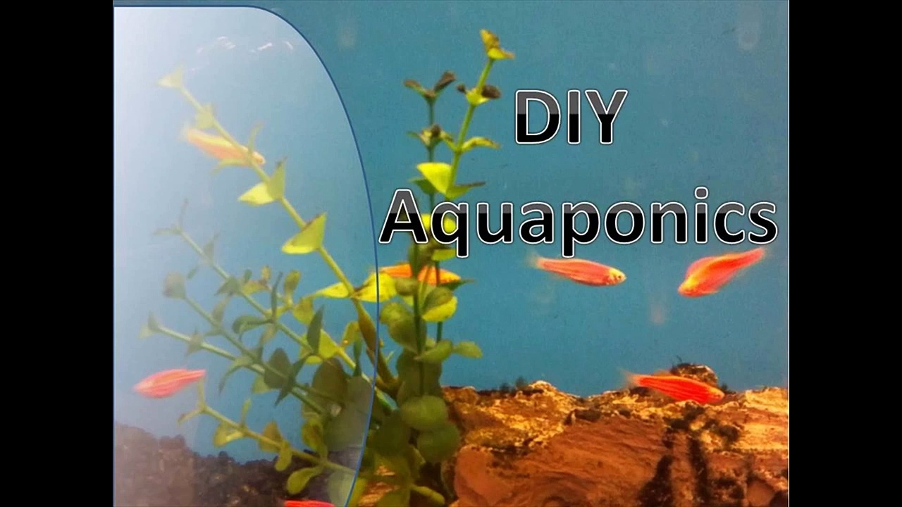 Aquaponic Design for Greenhouse and Outdoor