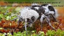 10 animaux étranges que vous n'avez jamais vu