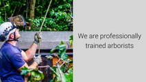 Tree Surgeons Arnold Nottingham - Call 07905675171 - Tree Surgeons in Nottingham