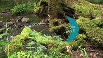 Protocole Carhyce : connaître et surveiller le fonctionnement physique des cours d'eau
