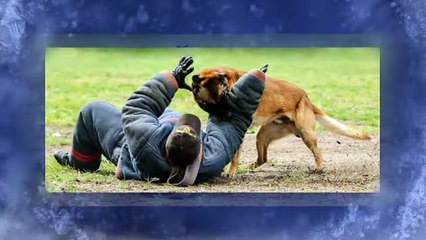 Police K9 Dogs For Sale