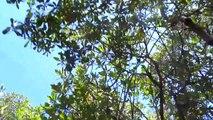 Australien #4 Daintree Rainforest & Cape Tribulation (14.11.15) [Leona in Australien]