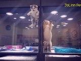 Un chaton s'échappe de sa cage pour aller rejoindre son ami le chiot !