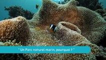 """La Minute du Parc naturel marin de Mayotte - """"Un Parc naturel marin, pourquoi ?"""""""