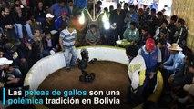 Las peleas de gallos son una polémica tradición en Bolivia