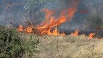 Bodrum Asırlık Zeytin Ağaçları Yangında Kül Oldu