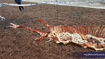Loch Ness Monster Remains Discovered?