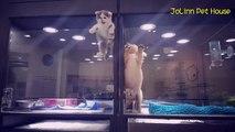 Ce chaton se sentait seul... Son évasion pour rejoindre son ami chiot va vous faire fondre...