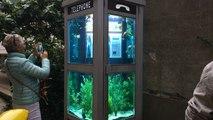Cabine téléphonique aquarium du Voyage à Nantes
