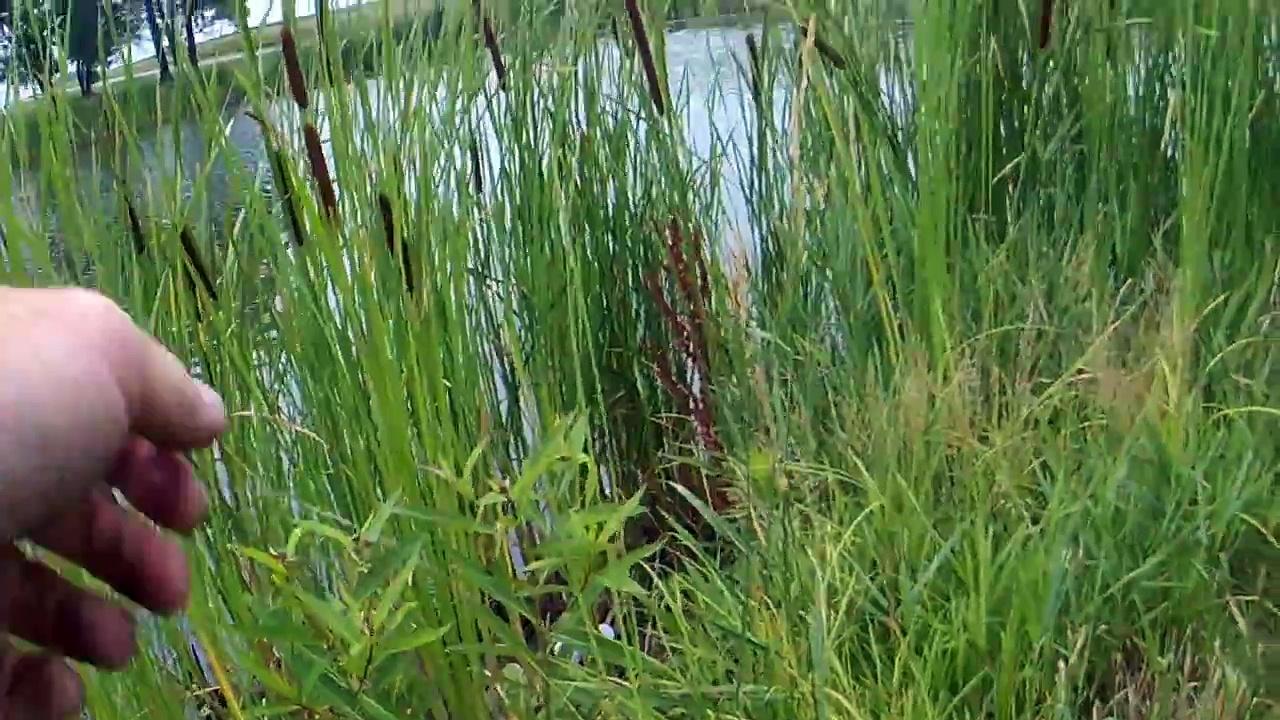 Pond Bassin