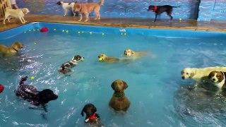Cette chienne adore être dans la piscine, mais elle ne sait pas nager. Elle fait donc... ÇA!