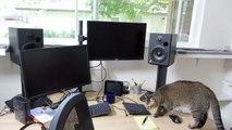 Un chat trouve un jouet caché, mais regardez ce qu'il fait avec... Wouah, il a vraiment du talent!!