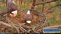 Berry College Eagles, 3.02.2016, 11:23.  Martha was so hungry !