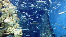 2012 Settembre,This is Japan! Acquario Kaiyukan - Osaka Aquarium 19/29
