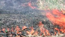 Farm Basics #817 - Burning Fields (Air Date 12/1/13)