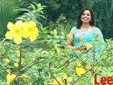 Americakak Naka Visa - Konkani Song - Nephie Rod - Dessak Bhetoi