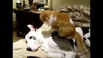 Мастер акупунктуры. Смешные приколы собаки кошки
