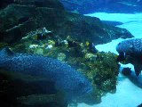 Georgia Aquarium - Fishies Part 1