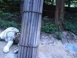 South Korea - Everland Safari Tour - 2