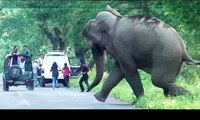 Shocking Elephant Attack on Human & Vehicles. Latest Elephant Attack Compilation