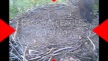 DECORAH EAGLES  5:41 AM CDT        D 23 FLEDGED