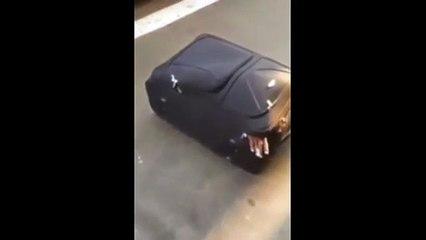 Intentaba cruzar la frontera dentro de una maleta