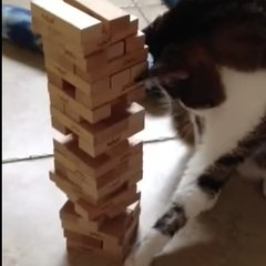 un chat joue au jenga