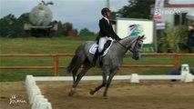 Équitation : 17ème concours complet international (Vendée)
