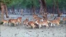 Wild Life in Sundarbans- India, The largest Mangrove Forest of the World