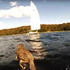 Deux hommes sauvent un écureuil de la noyade