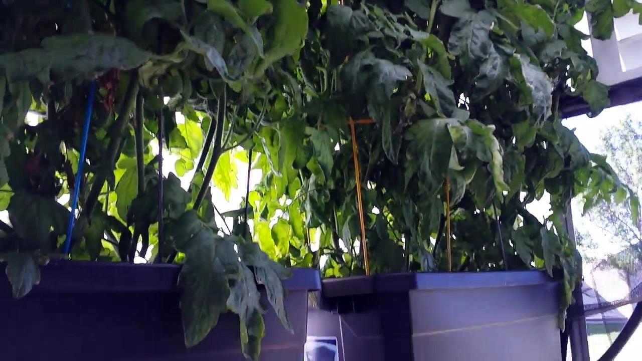 Greenhouse Aquaponics Hydroponics Short Video