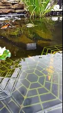 Pond guard