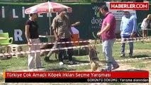 Türkiye Çok Amaçlı Köpek Irkları Seçme Yarışması